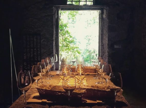 Wine tasting and wine experience in Orvieto close to Tuscany
